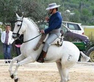 otras_disciplinas_western